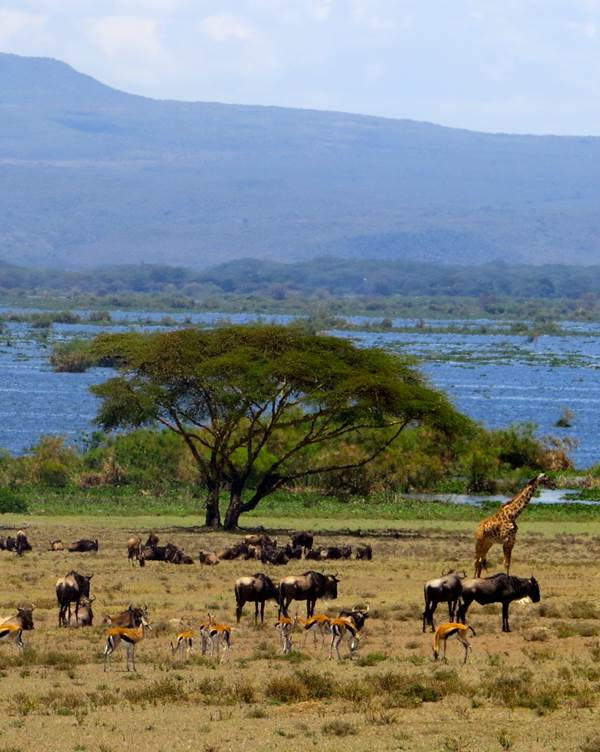 Soysambu Conservancy en Lake Nakuru