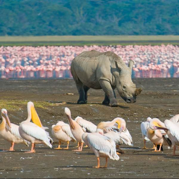 Lake Nakuru NP – Shaba Wildreservaat