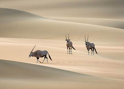 A Glimpse of Namibia