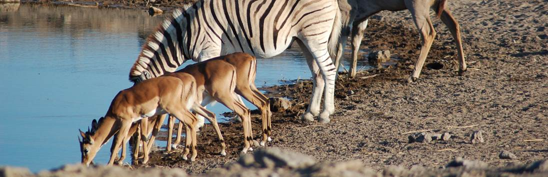 Damaraland - Etosha Nationaal Park