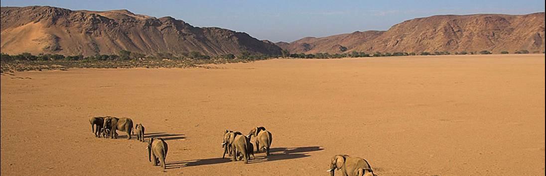 Damaraland - Palmwag
