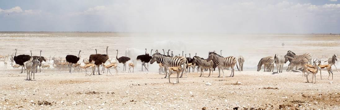 Etosha NP - Erindi Game Reserve