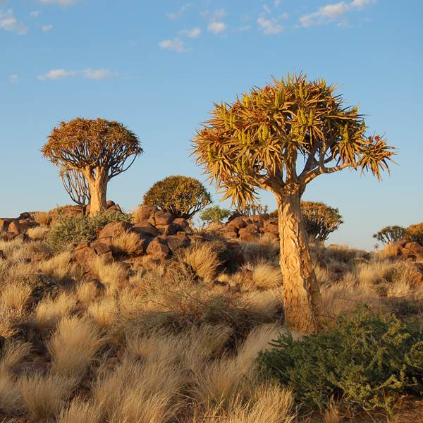 Fish River Canyon, Quiver Tree Forest en Giants Playground