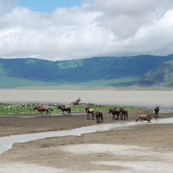 Serengeti Nationaal Park – Ngorongoro krater – Lake Manyara