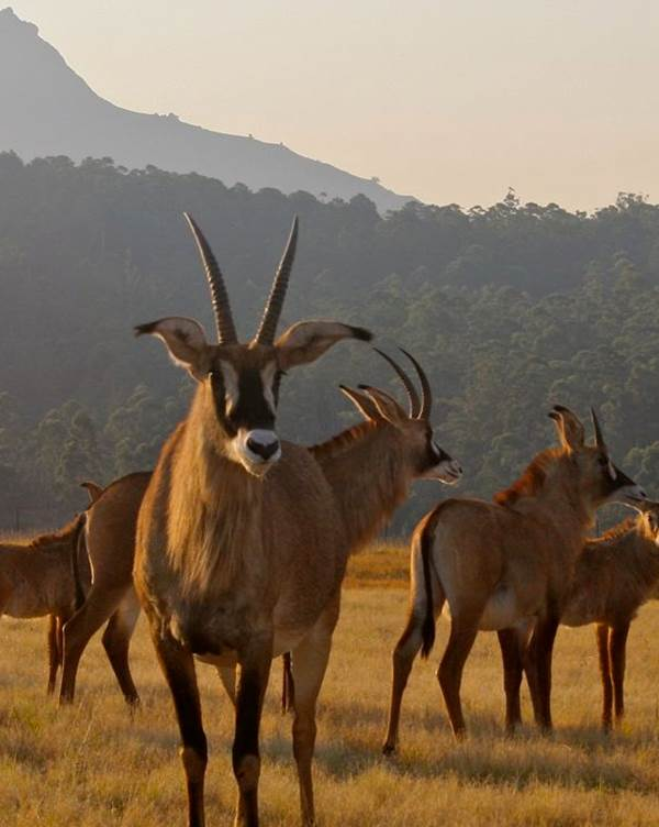 Swaziland – Milwane Wildlife Sanctuary